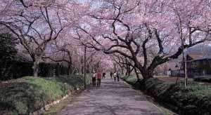 桜道ブログ