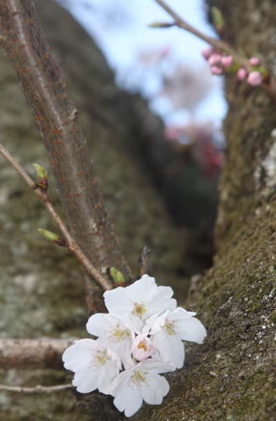 20110402功山寺1メール