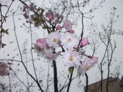 2010-03-31 14_50_48№(044-2)