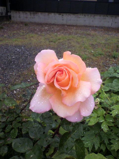 2010-05-12 10_21_00潤・006)