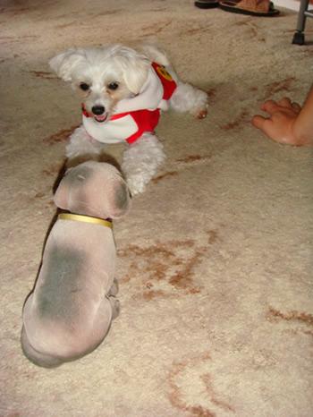 marvi and dog