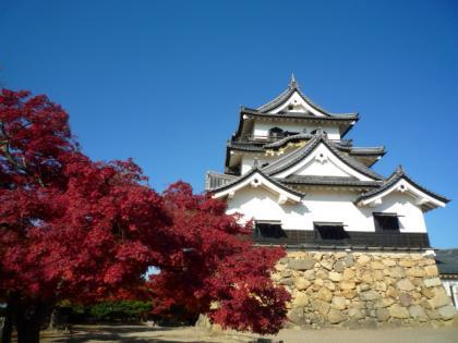 彦根城と紅葉10.11.30