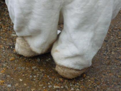 泥だらけの足7