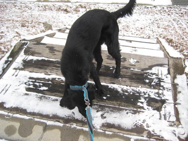 初雪散策体験。