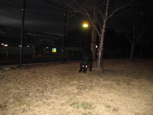 明け方散歩3