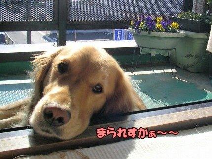 SANY0002_01_20100119130627.jpg