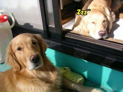 SANY0011_20100119125758.jpg