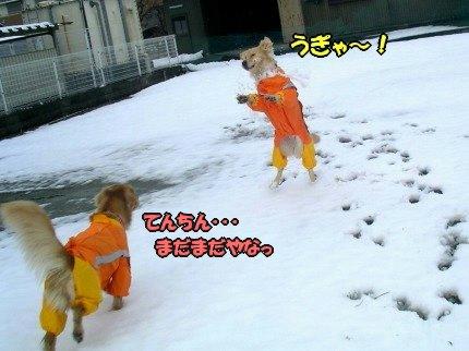 SANY0013_20100104090007.jpg