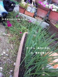 moblog_d09a5032.jpg