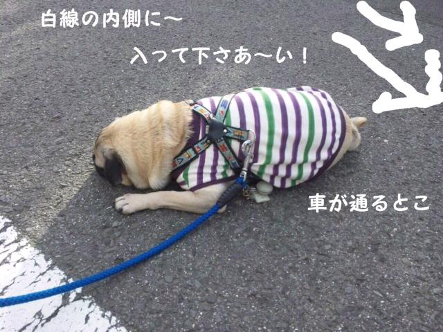 moblog_f2a00628.jpg