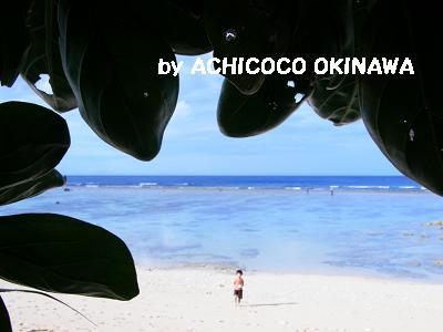 cccbubuaika5.jpg