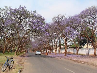 Jacaranda7_Nyerere2.jpg