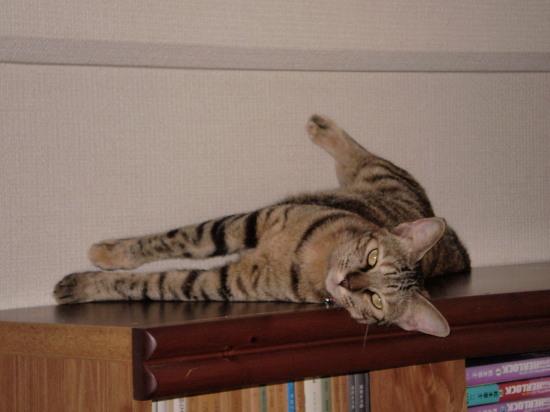 2011.7.18小梅1