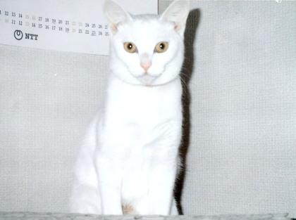 1994キキ