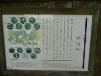 P1130679.jpg