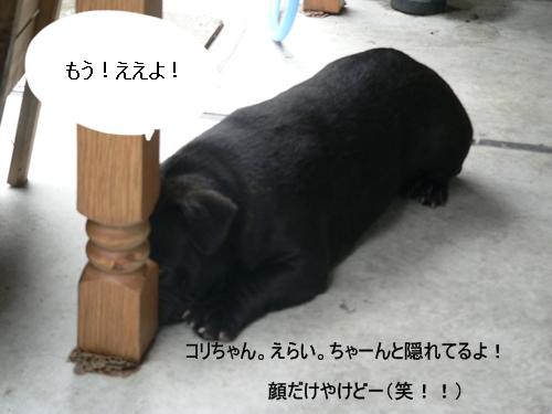 P1060504 - コピー
