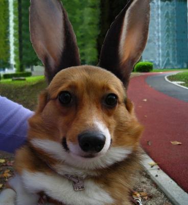 IMG_5631_Bunny.jpg