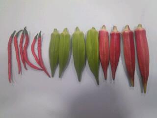 収穫! H23/9/18
