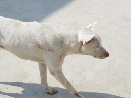 ホーチミン犬1