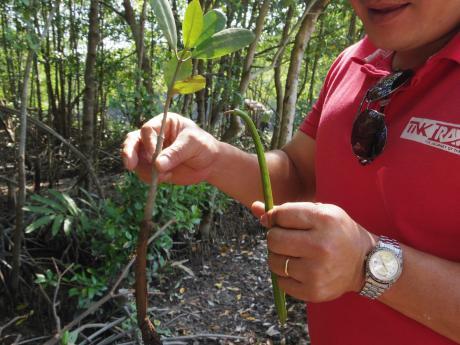 ホーチミンマングローブツアー種