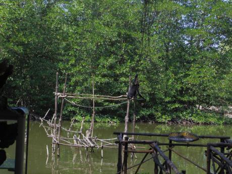 ホーチミンマングローブツアー猿