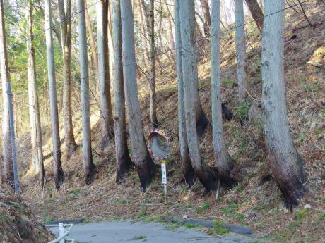 気仙沼焼けた木