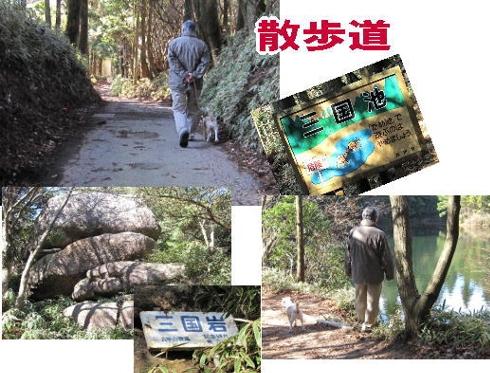 2009・12・06木漏れ日の森3