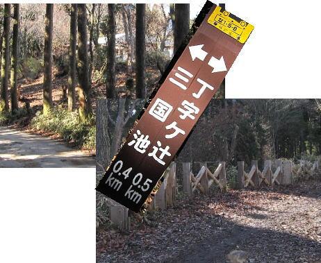 2009・12・06木漏れ日の森1