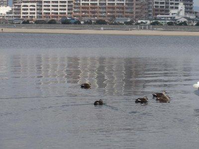2011・01・23鳴尾浜3