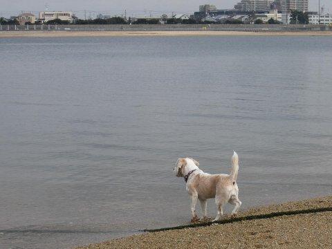 2011・01・23鳴尾浜2