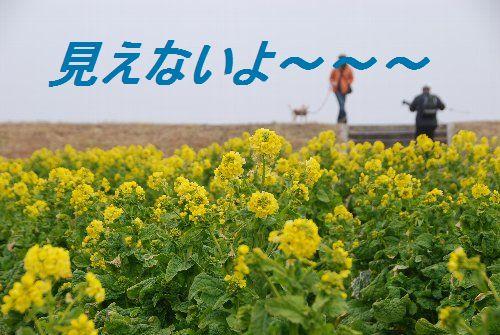 2011・02・05菜の花畑3