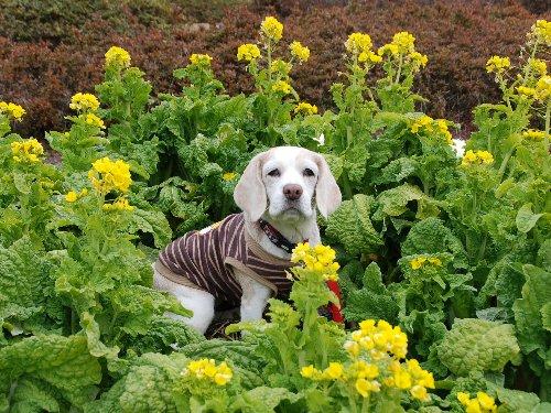 2011・02・05菜の花畑5