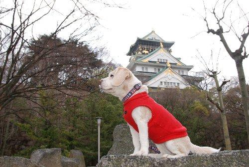 2010・02・12大阪城1