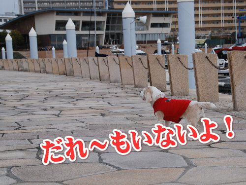 20120103芦屋浜1