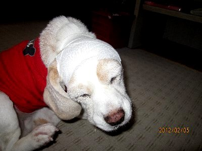 2012・02・05耳血腫2