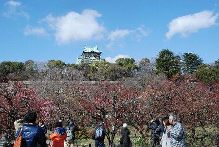 2013・02・24大阪城2