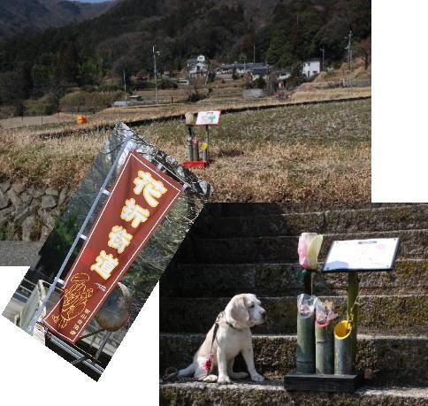 2013・03・09花折街道a