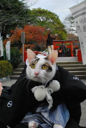 鶴岡八幡と袴猫