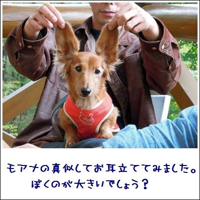 cha_20111028210221.jpg