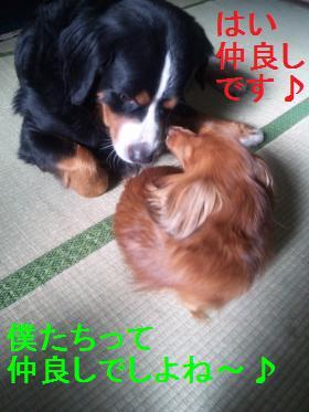 101205_100939[1]_convert_20101206083846