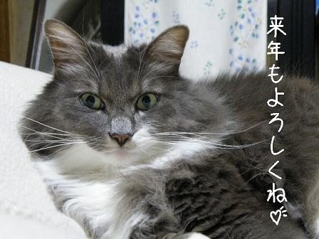 2009_12260023.jpg