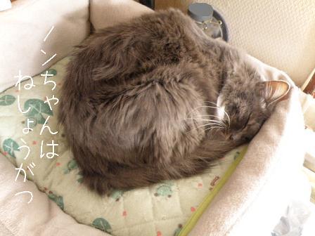 2010_01010023.jpg
