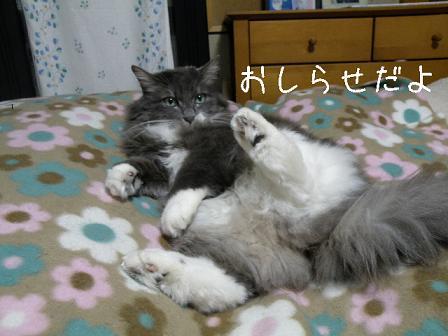 コピー ~ 2011_02040005