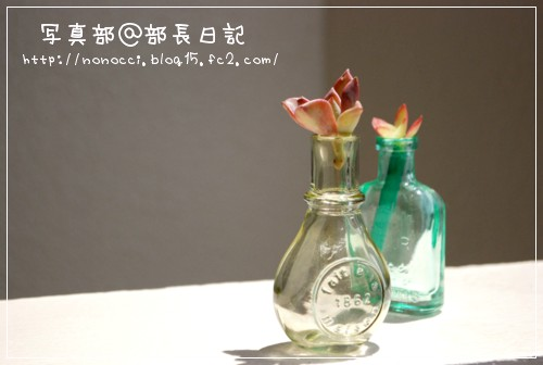 DSC_8330.jpg