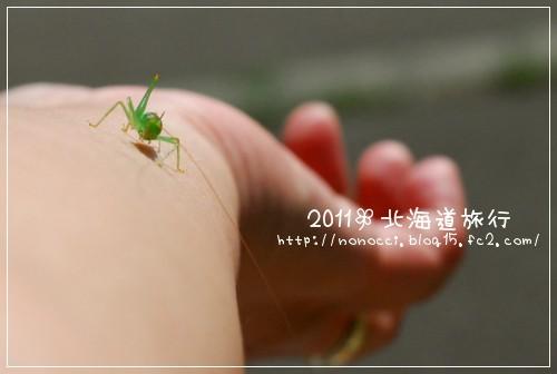 DSC_9723.jpg