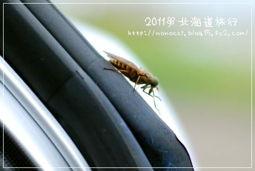 DSC_9745.jpg