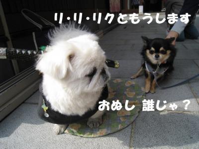 IMG_61132476.jpg
