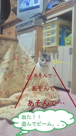 001_convert_20101223171252.jpg