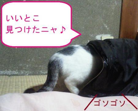 002_convert_20110119124502.jpg