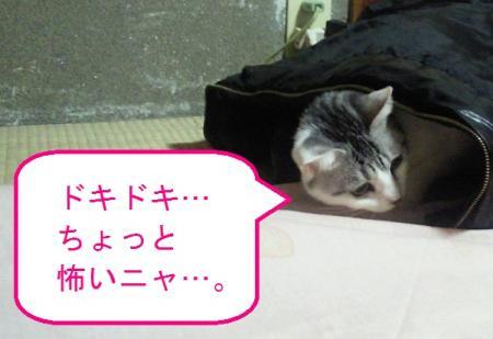 003_convert_20110119124543.jpg